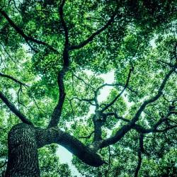木を見て森を見ず?先生は作業代行と集客支援どちらをお求めですか?
